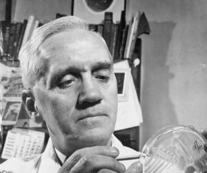 A black and white photo of Alexander Fleming examining bacterial growth on a petri dish.