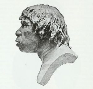 A side profile view of an artists rendition of what the Piltdown Man may have looked like, had he been real.