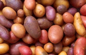 Image shows potatoes in several colours and sizes.