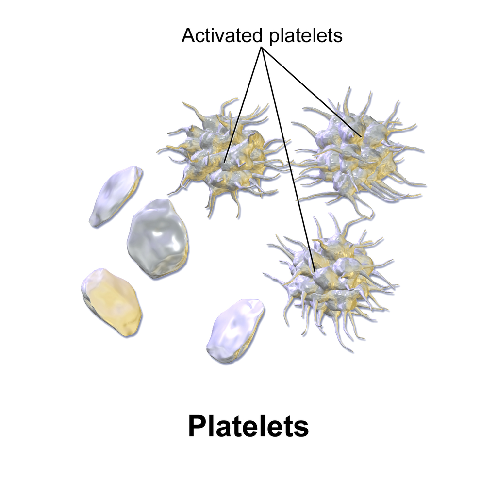 14.5.6 Activated Thrombocytes