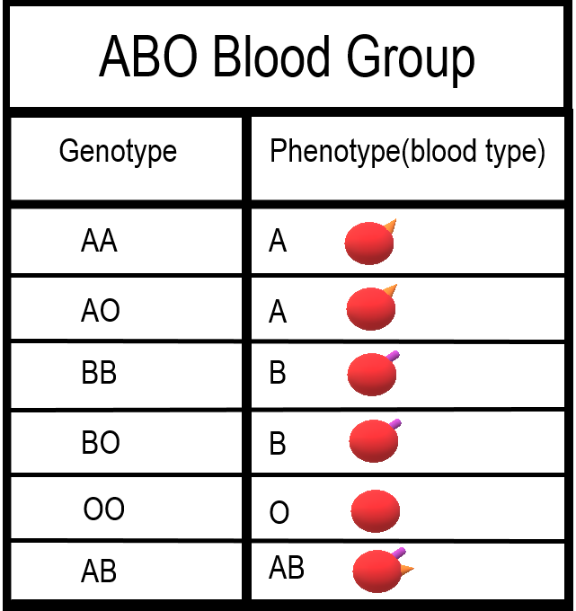 ABO Blood types