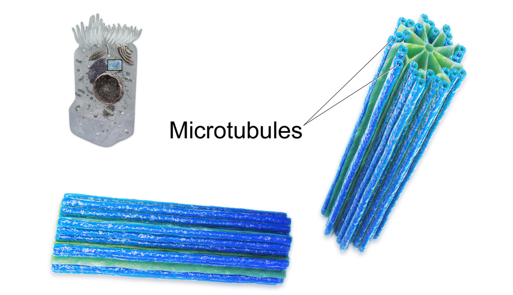 Image shows a diagram of a centriole, made up of microtubules. There are nine bundles of microtubules arranged in a circle to form the tube-shaped centriole.
