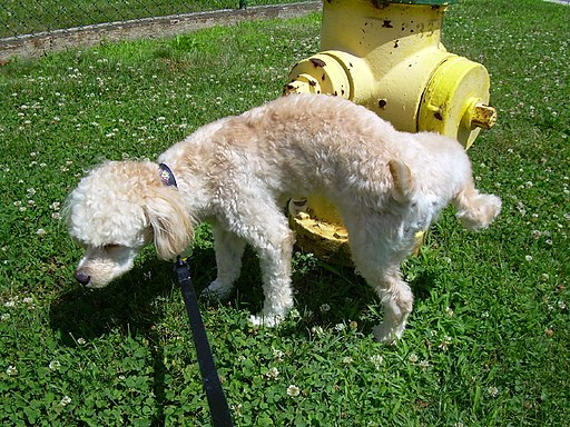 16.5.1 Dog peeing on fire hydrant