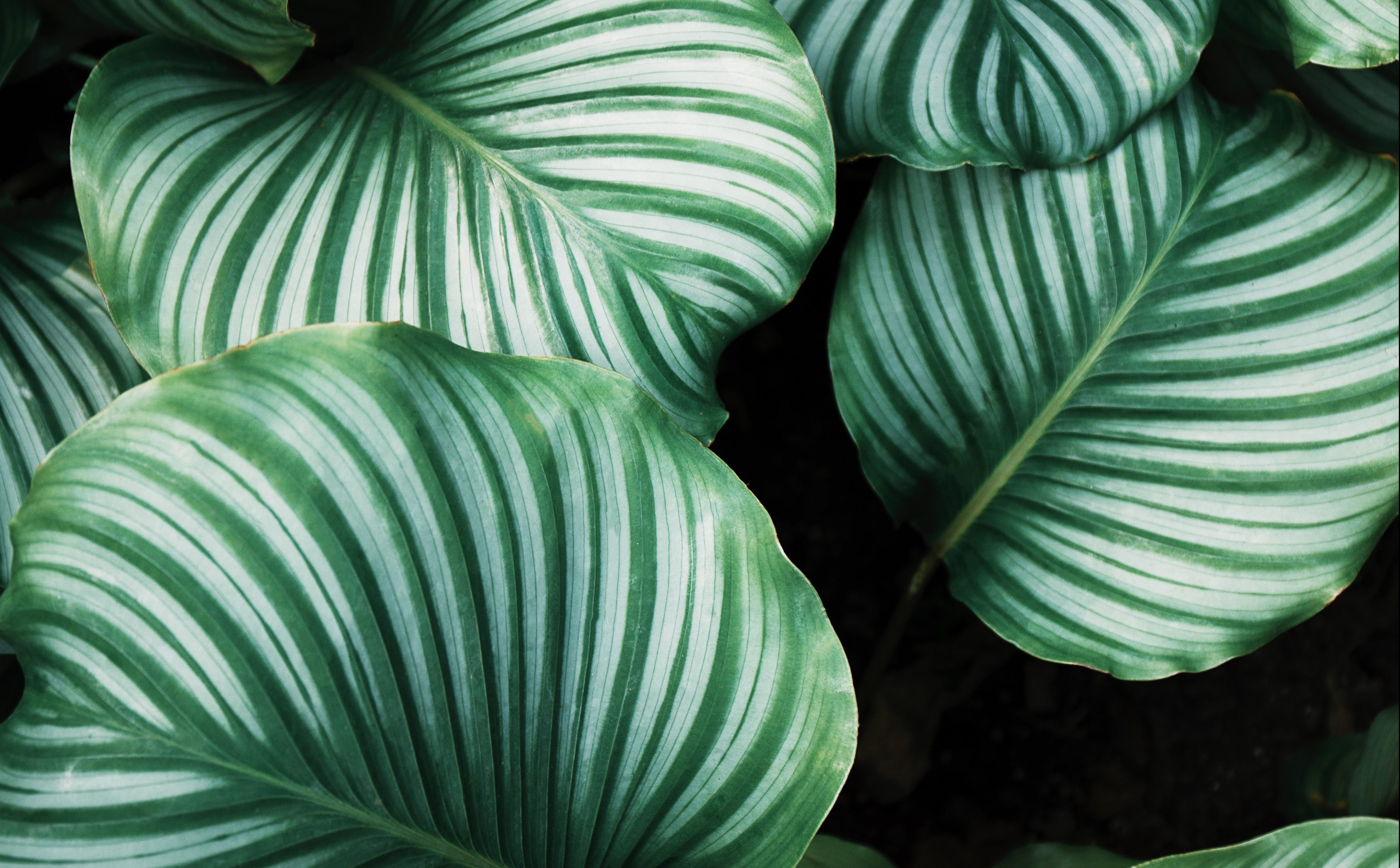 Image shows a photo of a leafy plant