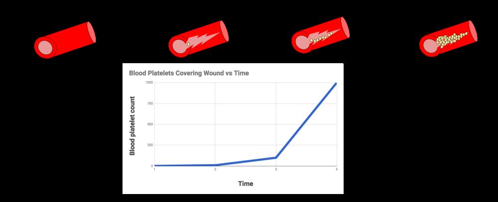 Positive Feedback Loops Blood Clotting