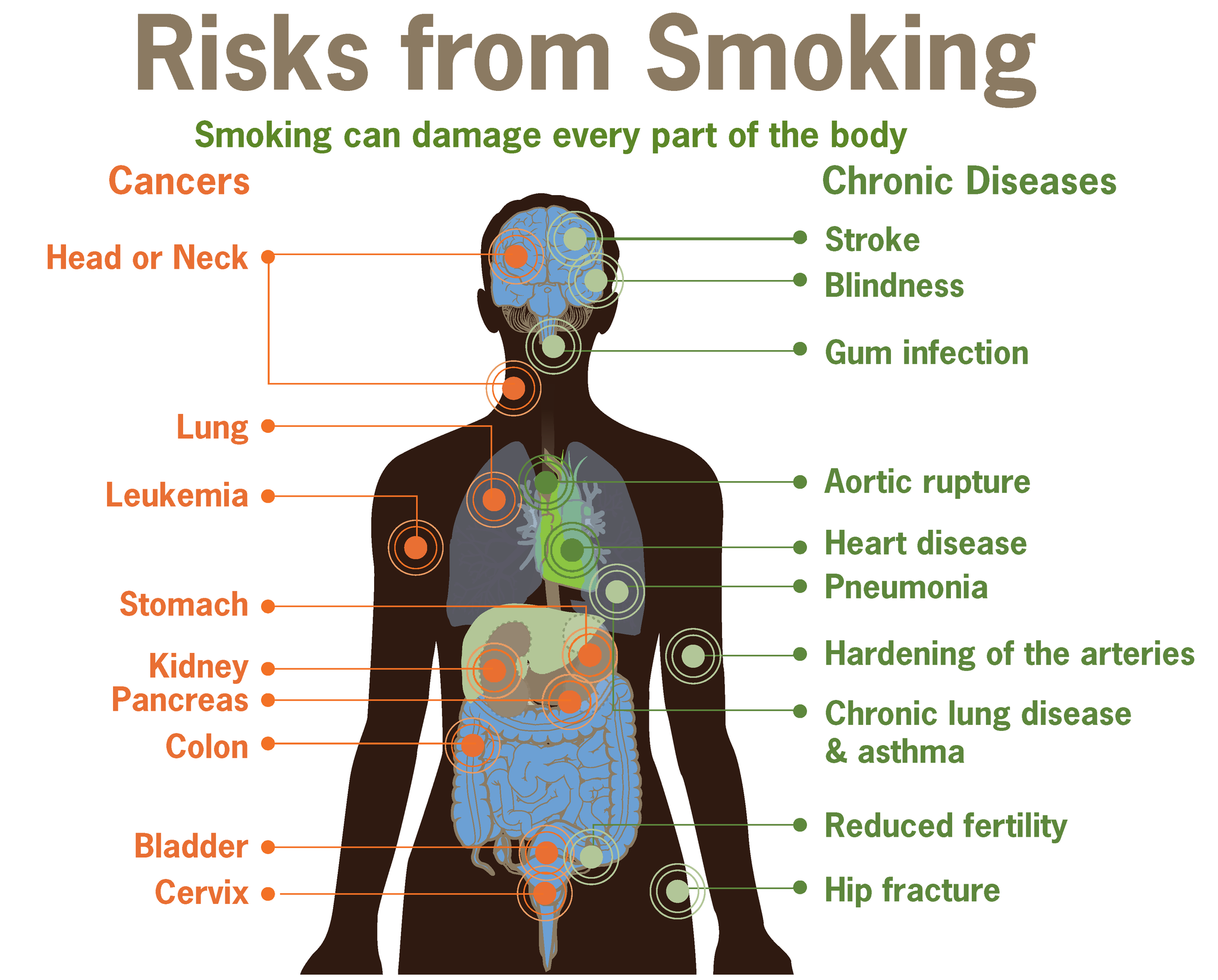 15.6.2 Effects of Smoking