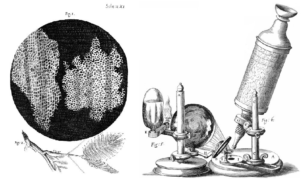 Diagram shows sketches from the lab journal of Robert Hooke. It includes a sketch of cork as it appeared under the microscope, a sketch of the cork tree branch his sample came from, and a sketch of the microscope apparatus he used.