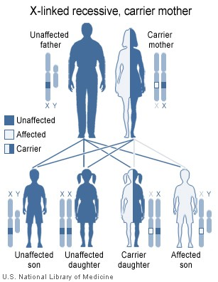Image shows the heredity implications of an X-linked recessive gene carried by the mother.
